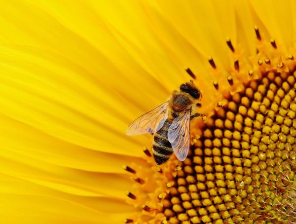 EWANTO_wird_Bienenpate